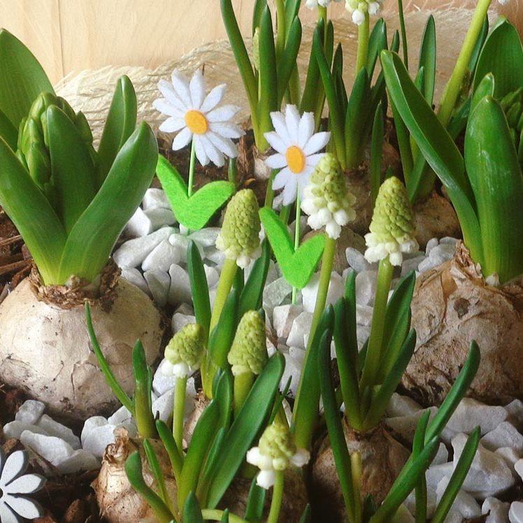 Schale mit Frühjahrsblüher